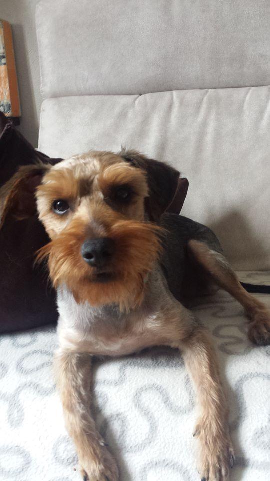 TEDDY petite canaille de 7/10 mois Adopté  Teddy_12