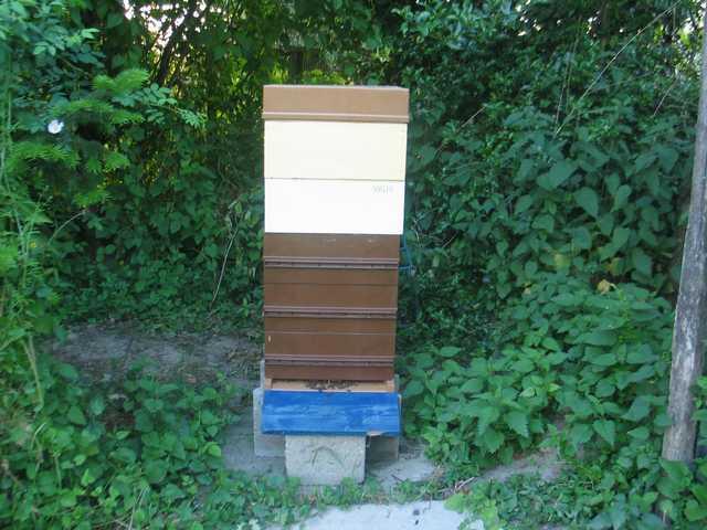 les ruches peintes en rouge Img_2042