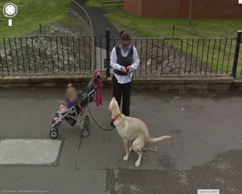 STREET VIEW:les chiens domestiques dans les cours ou en laisse dans les rues !  Chien10