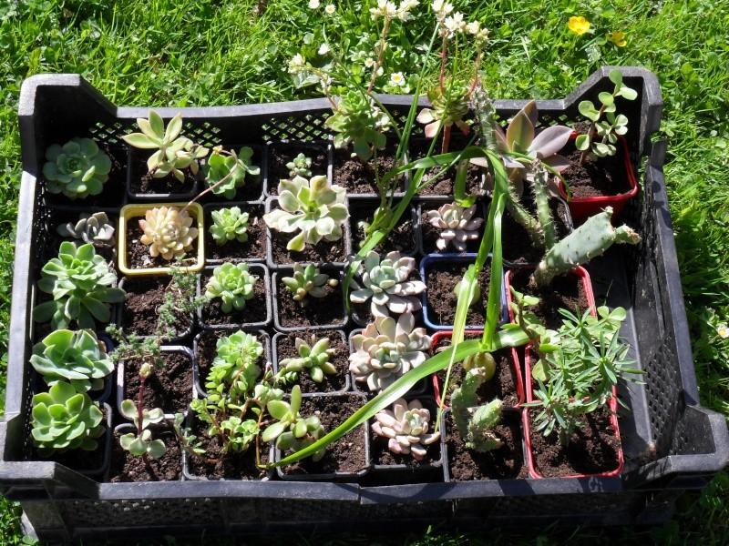 Boutures pour une bourse aux plantes Boutur11