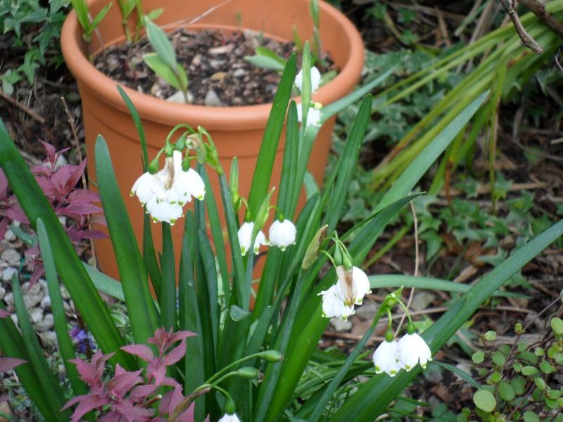 Quelques fleurs de printemps Sorton20