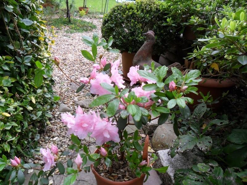 Quelques fleurs de printemps Sorton21