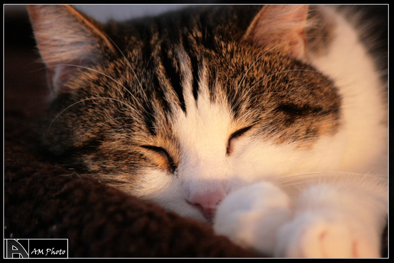 Heiko beau chaton tigré et blanc - BEUVRAGES Copie_13