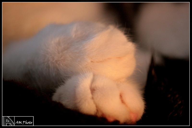 Heiko beau chaton tigré et blanc - BEUVRAGES Copie_16