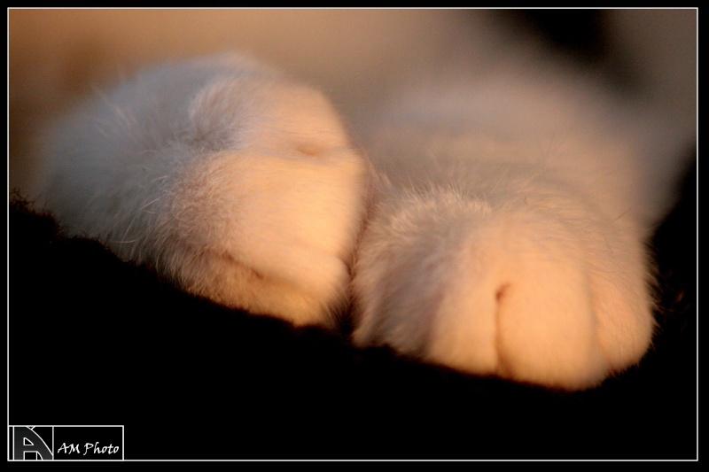 Heiko beau chaton tigré et blanc - BEUVRAGES Copie_17
