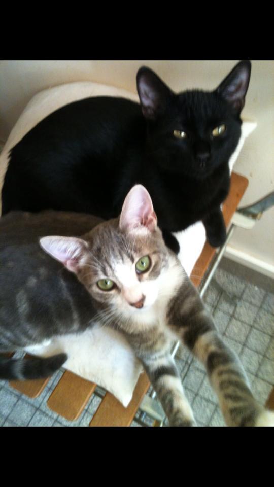 Deux amours de chats, un foyer au bout d un an ? Gaspar13