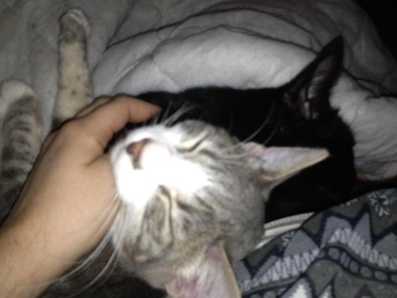 Deux amours de chats, un foyer au bout d un an ? Marley12