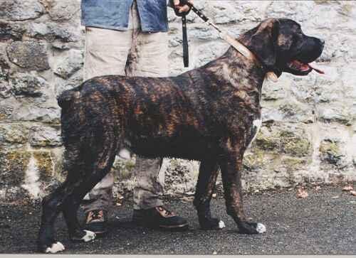 A votre avis... de quelle race est ce chien ? - Page 39 Chien_10