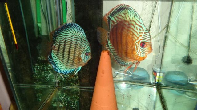 couple turquoise  Dsc00412