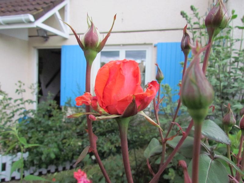 Mon Jardinet 2017... Oissss11