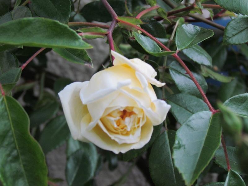 Mon Jardinet 2017... Oissss21