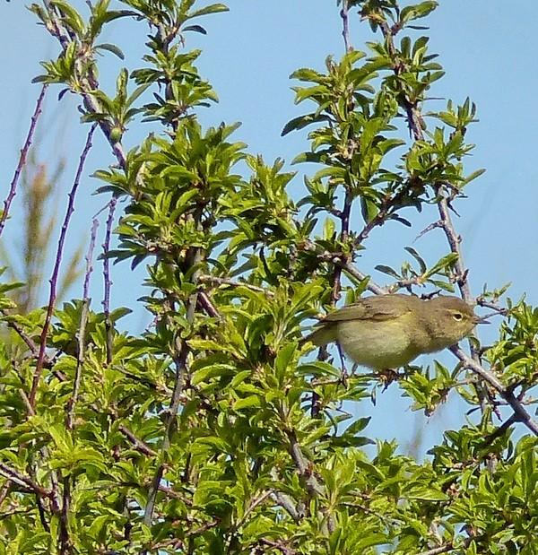 Quel est cet oiseau du littoral Haguais ? 25_04_12