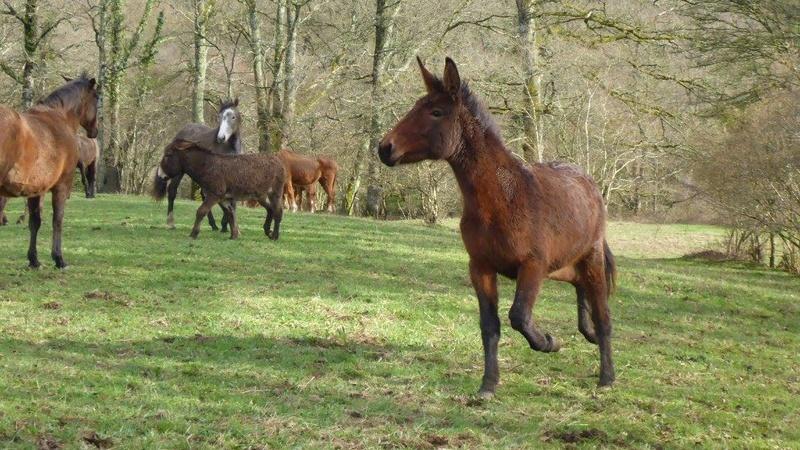 FALBALA - ONC mule née en 2015 - adoptée en juillet 2016 par Thierry - Page 2 17436210