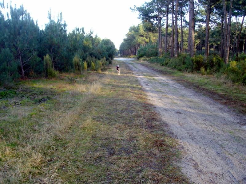 Le Médoc, c'est aussi la forêt :-) 1-imgp11