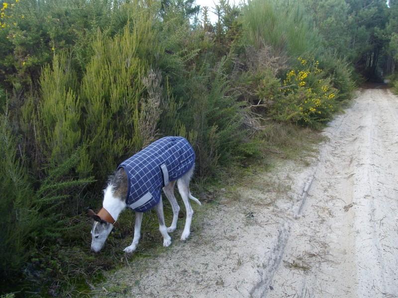 Le Médoc, c'est aussi la forêt :-) 1-imgp14