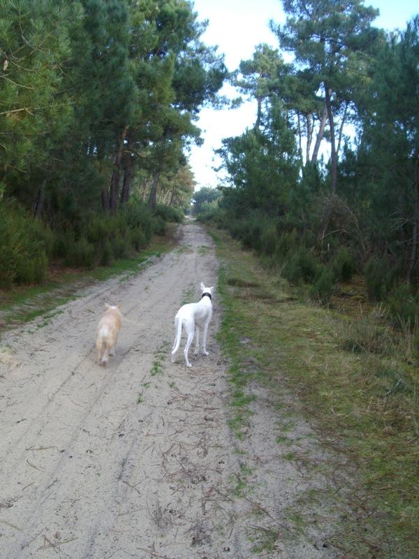 Le Médoc, c'est aussi la forêt :-) 1-imgp17