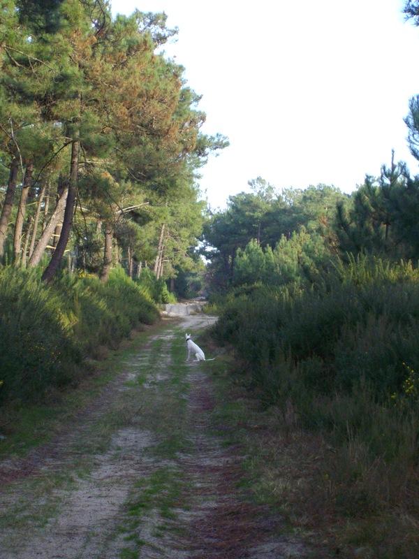 Le Médoc, c'est aussi la forêt :-) 1-imgp18