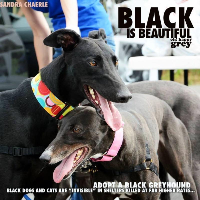 Les beautés noires du forum à l'adoption  - Page 3 10692110