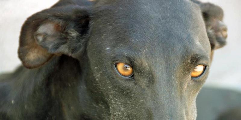 Les beautés noires du forum à l'adoption  - Page 2 55096910