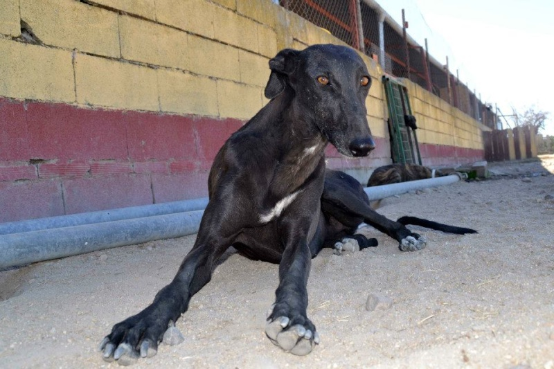 Les beautés noires du forum à l'adoption  - Page 4 55771410