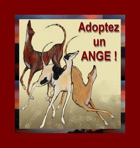 Galga Charlotte – un amour – Adoptée !  - Page 2 Adopta21