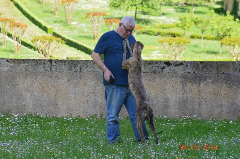 "Pini galga barbuda à l'adoption ""Scooby France"" Adoptée - Page 7 Pini_010"