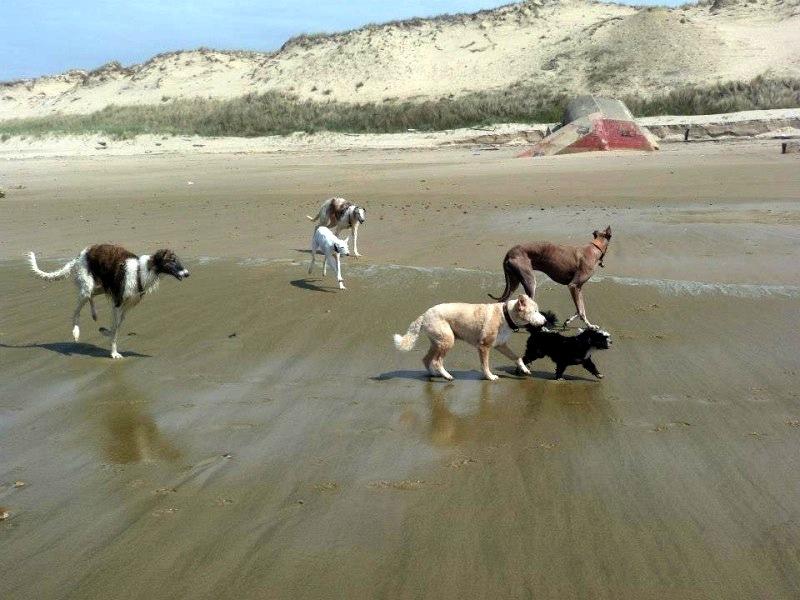 """Coup de pouce pour Rowdy """"Cani sénior """" Wzyfbl10"""
