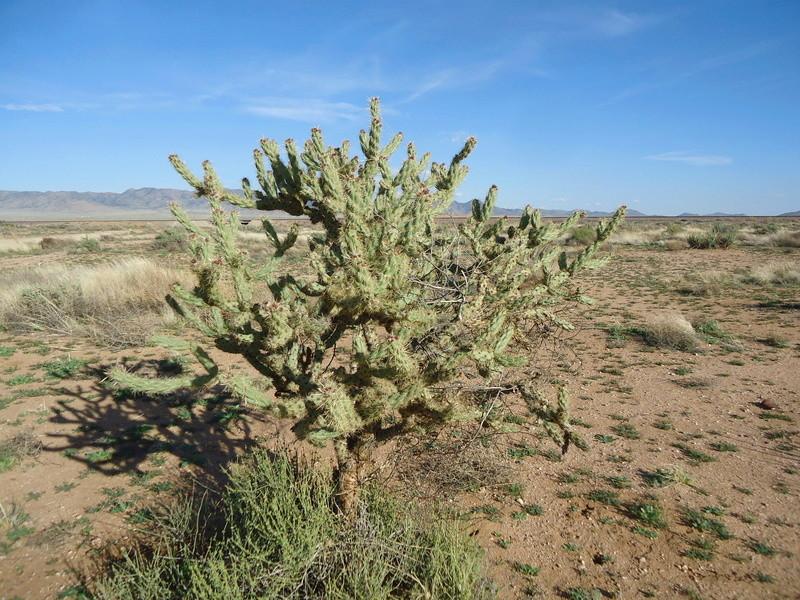 Chez mon pote en Arizona Dsc04112