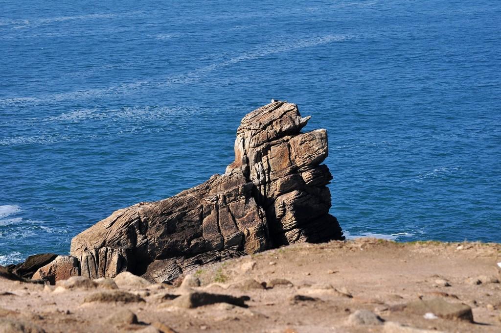 """Chien de mer """"fossilisé"""" !!! Dsc_0132"""