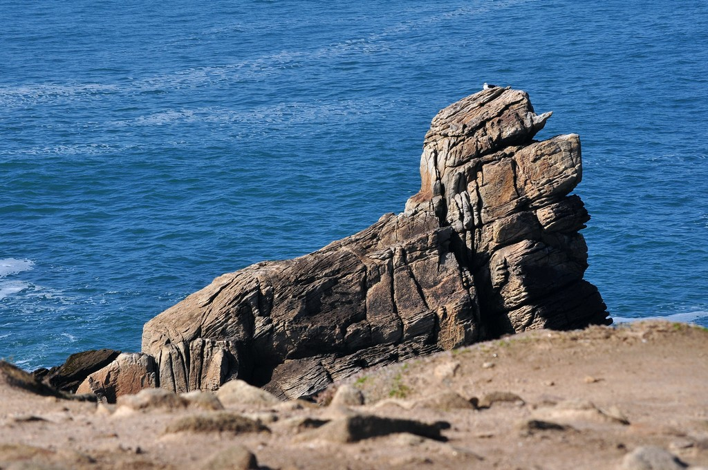 """Chien de mer """"fossilisé"""" !!! Dsc_0133"""