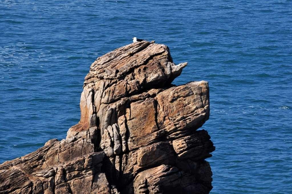 """Chien de mer """"fossilisé"""" !!! Dsc_0134"""