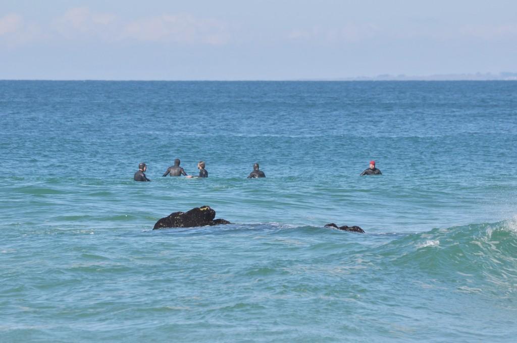 des otaries ??? non des surfeurs ! + ajouts ! Dsc_0189