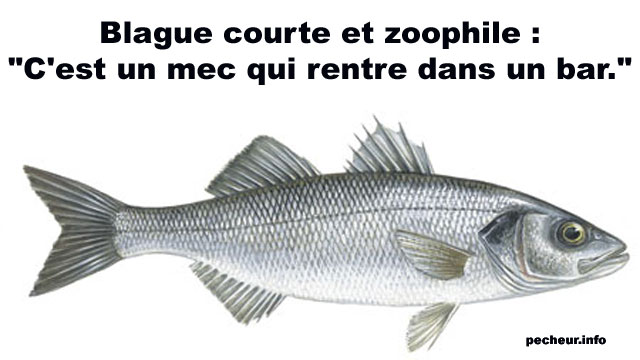 humour - Page 5 Blague11