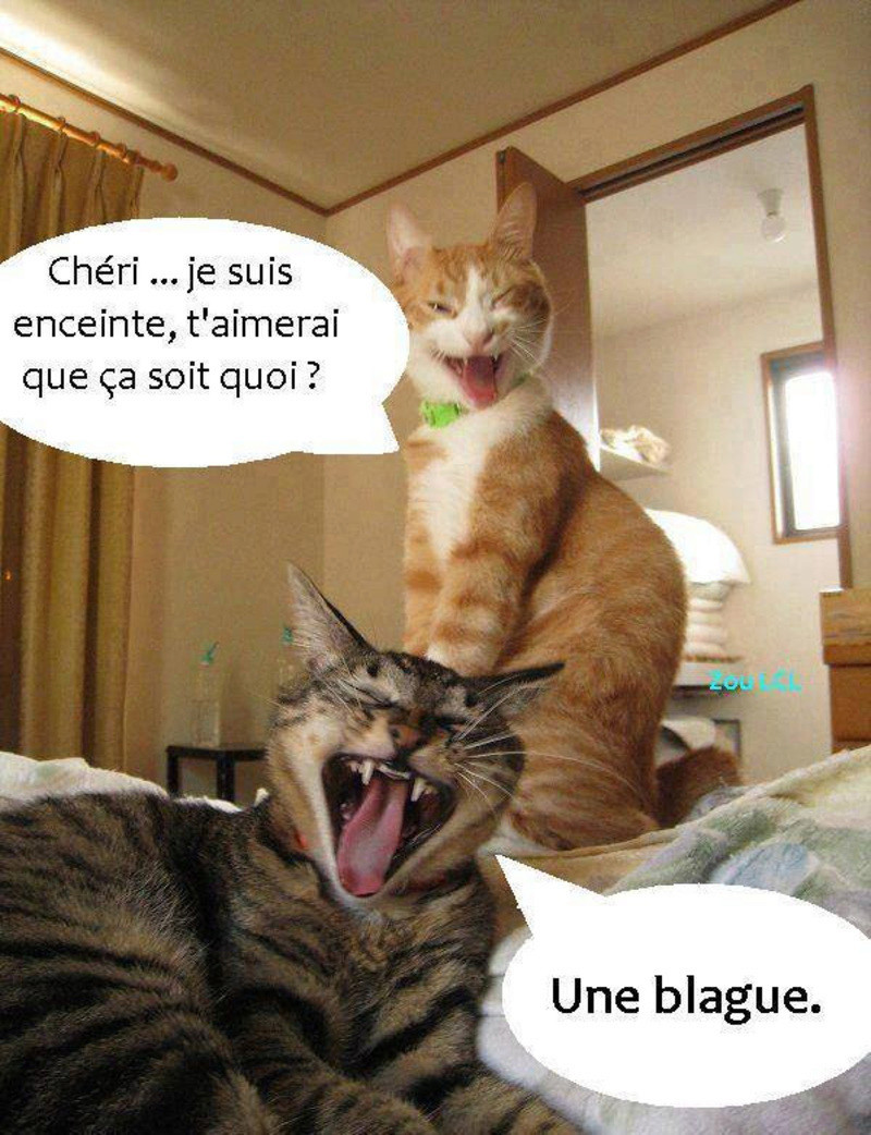 humour - Page 3 Encein10