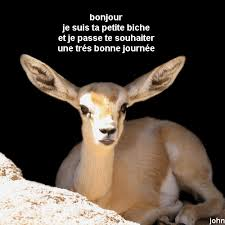 humour - Page 21 Images14