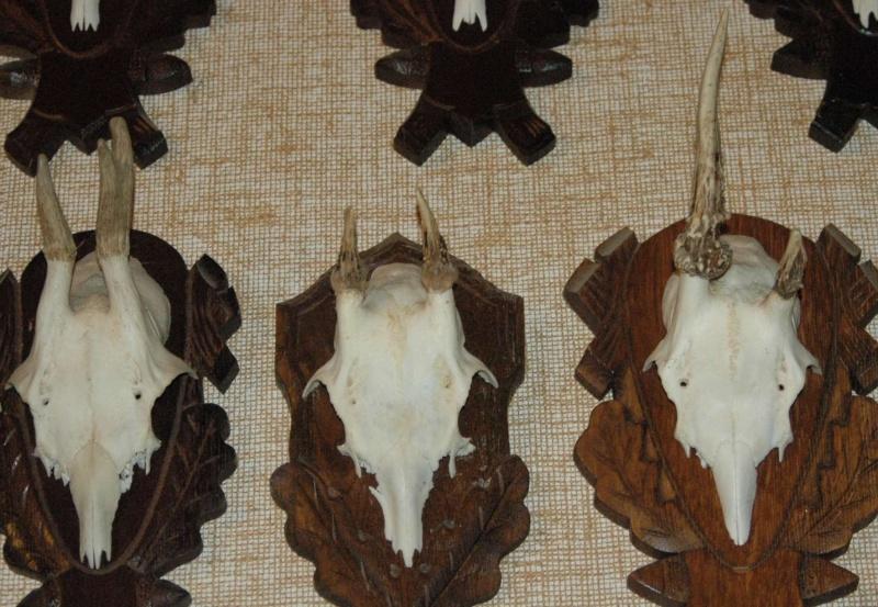 Têtes bizardes de brocards et cerfs 33710