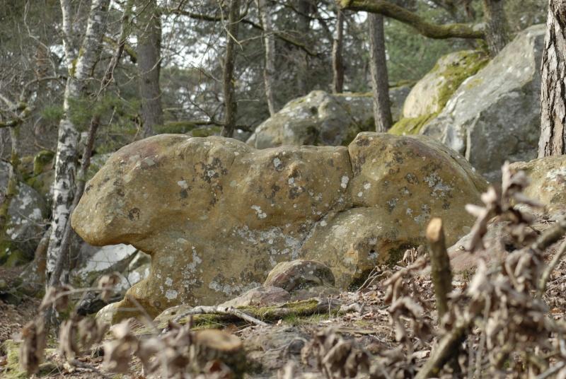 Croix du Calvaire, Fontainebleau _bob7012