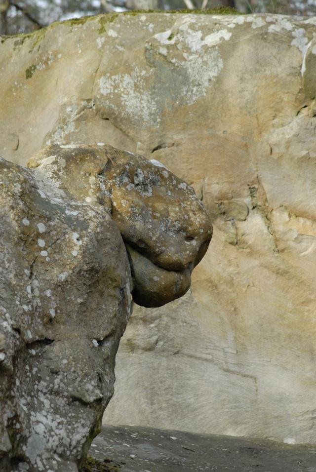 Croix du Calvaire, Fontainebleau _bob7013