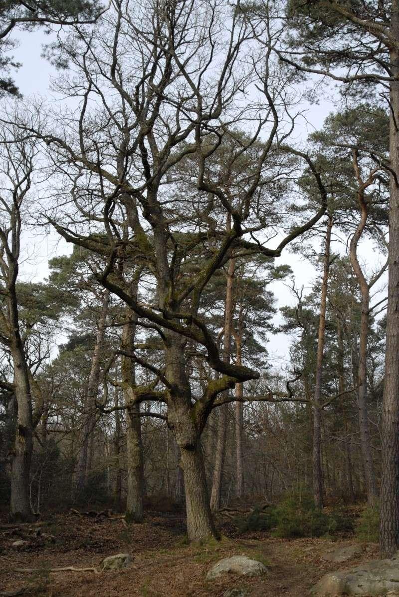 Croix du Calvaire, Fontainebleau _bob7014