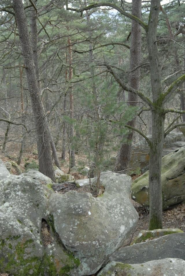 Croix du Calvaire, Fontainebleau _bob7018