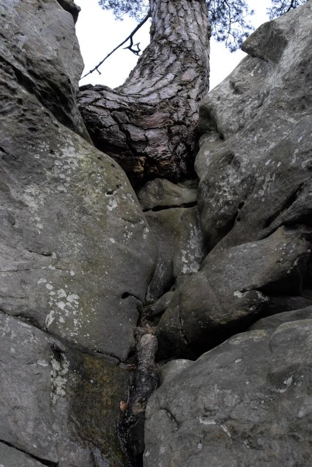 Croix du Calvaire, Fontainebleau _bob7019