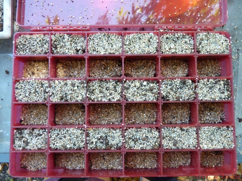 Méthode stockage tubéreuses hors pot Boite_17