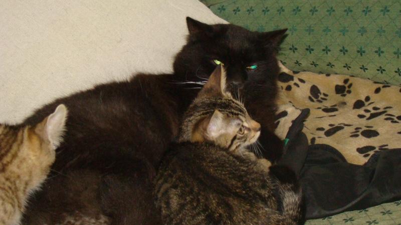 Cicco, mâle, ,07/13, tabby brown, IE 250268711031271 / Catégorie coup de pouce : il attend  depuis trop longtemps une famille Dsc08016