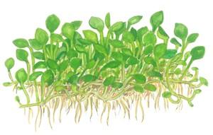Plus petite plante avec faible besoin de lumière 110