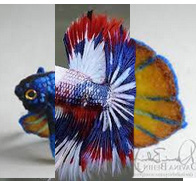 Futur aquarium pour Betta - Page 2 1_09_310