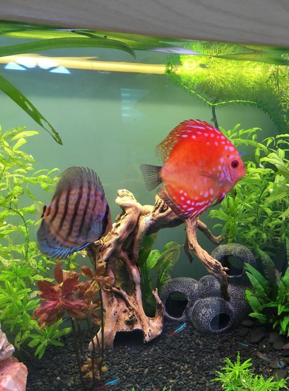 Aquarium de ilouange - Page 2 Img_0725