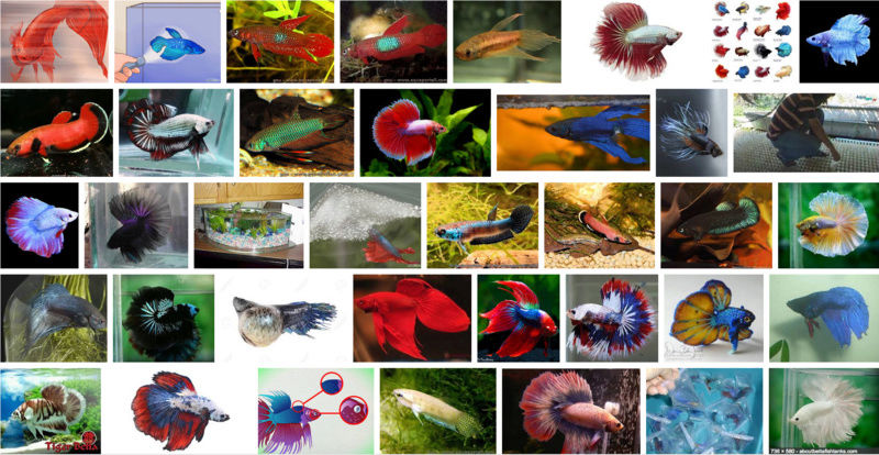 Futur aquarium pour Betta Par_de11