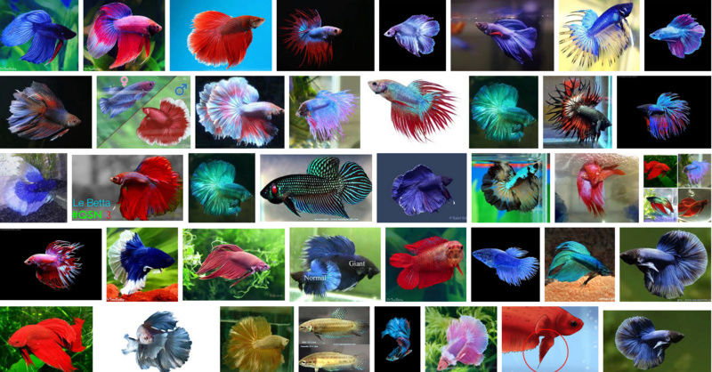Futur aquarium pour Betta Par_de12