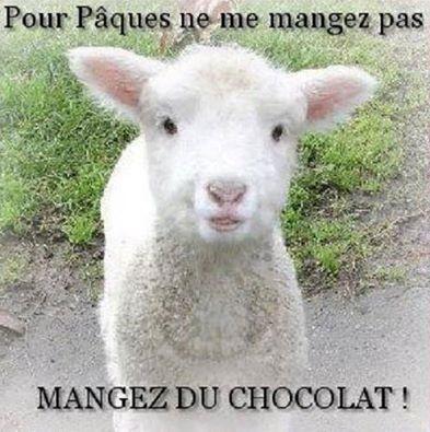 La journée du chocolat Petit-10
