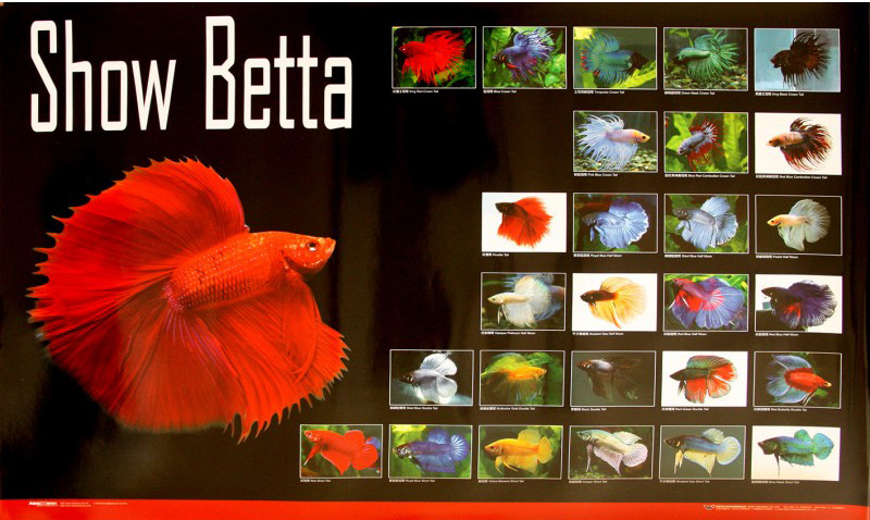 posters poissons  Poster54